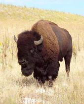 It's A Buffalo - Divorce Song/Somewhere in Range